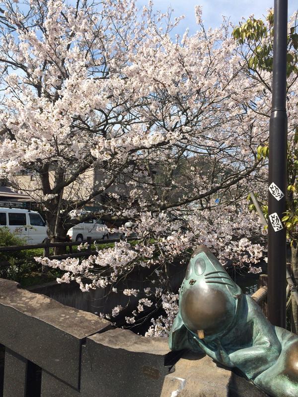 水木しげるロードの桜